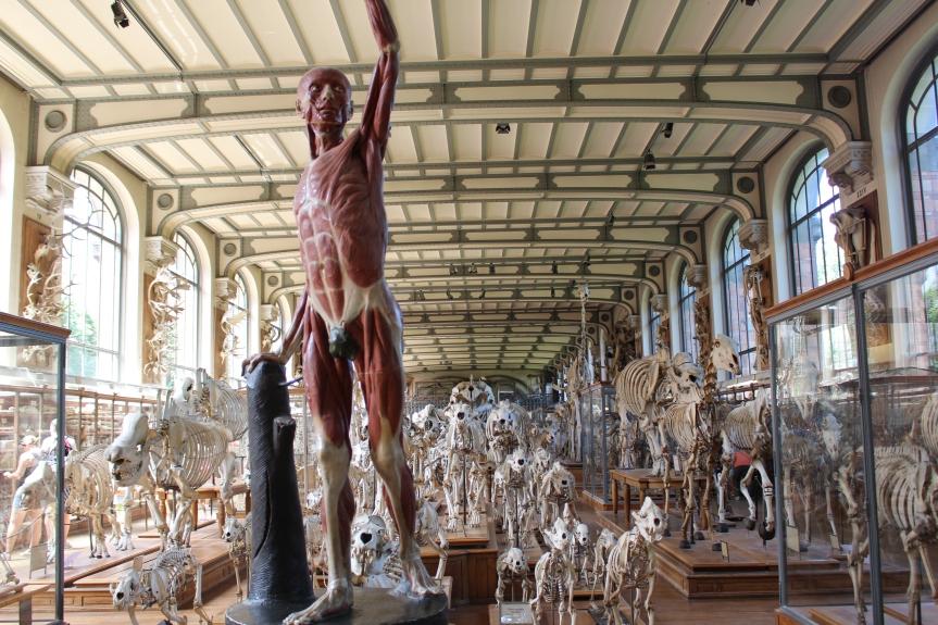 La Galerie de Paléontologie et d'AnatomieComparée