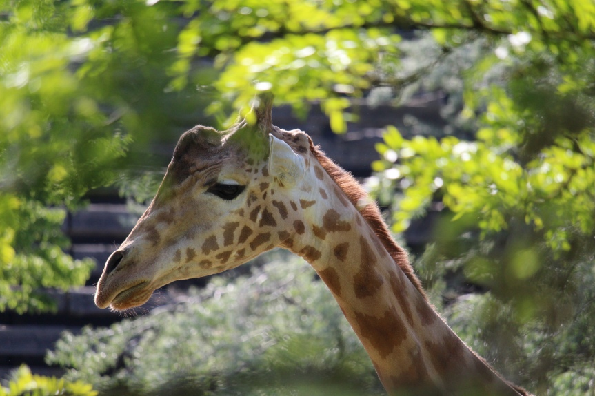 Le Parc Zoologique deParis