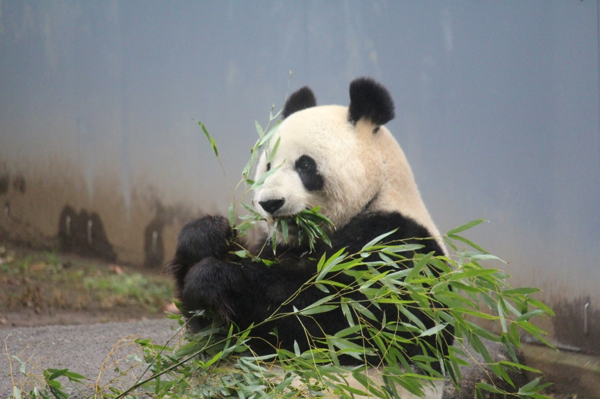 Tokyo : Zoo de Ueno
