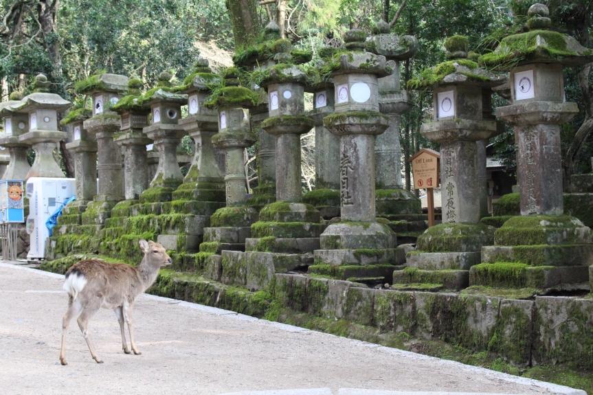 Nara : Kasuga Taisha